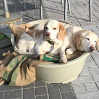 Bürohunde Carlos und Chilli
